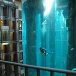 6. Гигантский аквариум на снимке является частью шахты лифта. В аквариуме живет более 1500 рыб. Источник: neogaf.