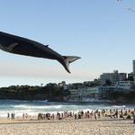 12. Фестиваль воздушных змеев, или Фестиваль ветров в Сиднее (Австралия). Источник: moya-planeta.