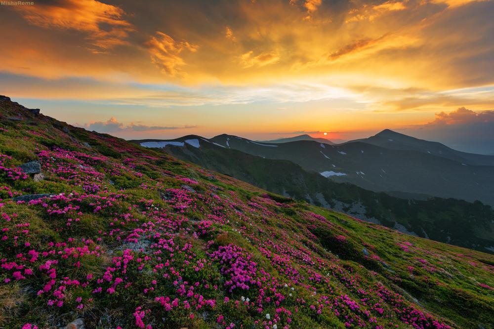 Цвіте і квітне Чорногора!!! Автор: Михайло Ременюк