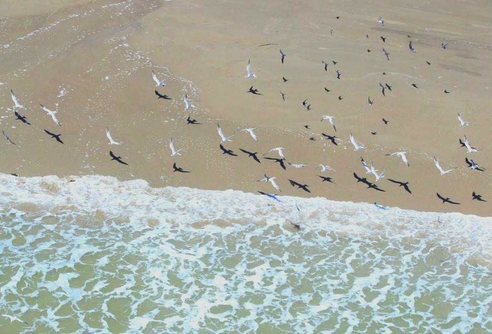 "3 ""Ясное побережье"". Побережье Техаса вдоль Мексиканского залива. Автор - MATTHEW GOODWIN."