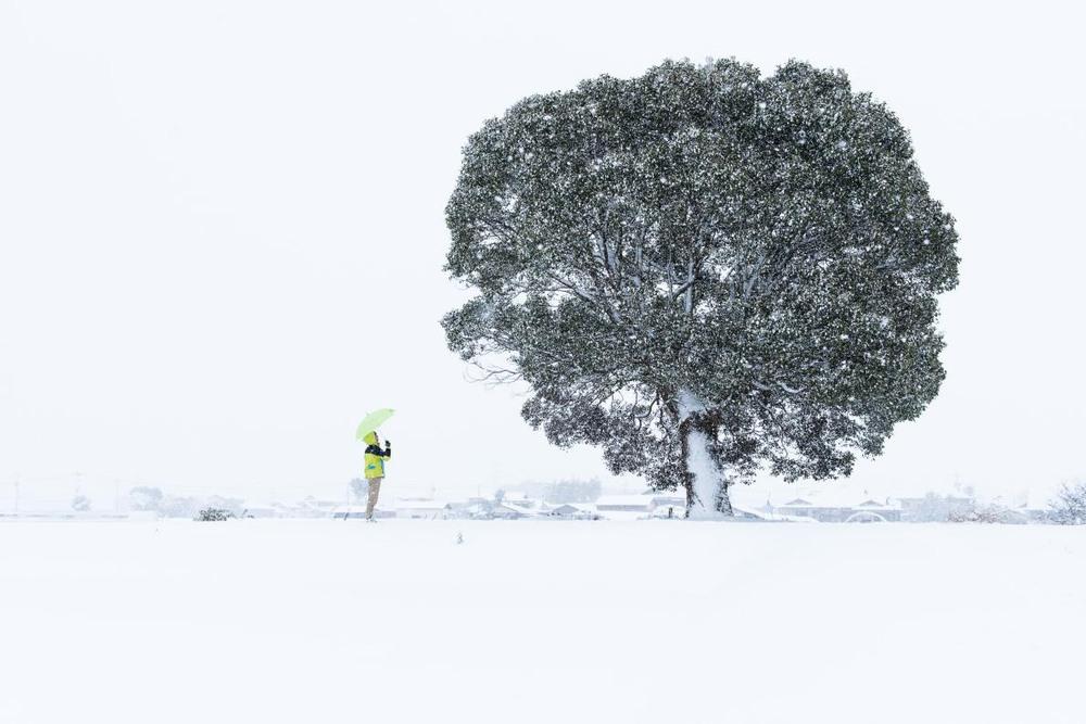 """5 """"Удивительно снежно"""". Заснеженное дерево в Саге — префектуре японского региона Кюсю. Автор - HIDEKI MIZUTA."""