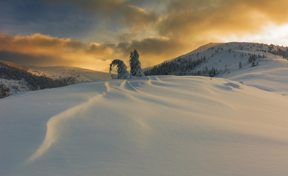 Зимові красуні Автор: Михайло Ременюк