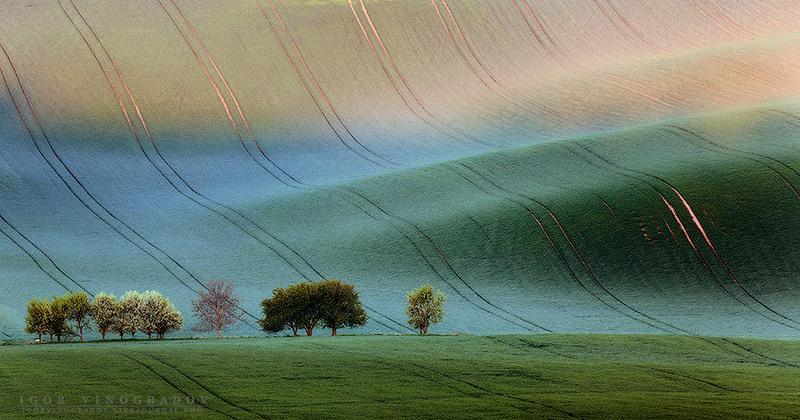 Бархатное одеяло. Автор: Виноградов Игорь