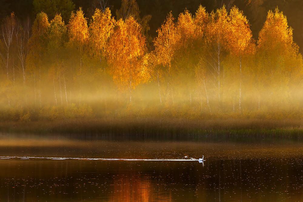 Автор: Александр Шиляев