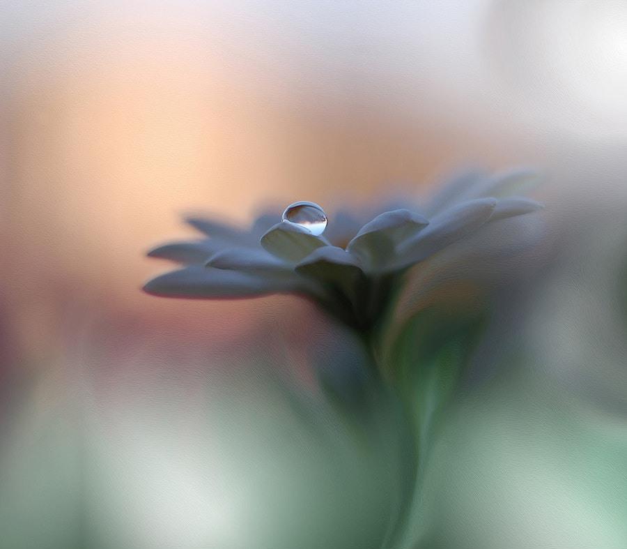 Работы фотохудожника Juliana Nan, Болгария
