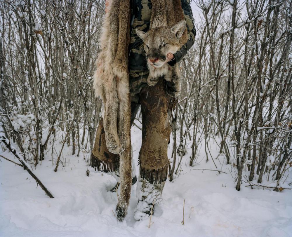 18 Автор: Дэвид Чанселлор. Охотник со шкуркой горного льва (пумы), которого он застрелил в этом году в южной части штата Юта. Зима – сезон охоты, поскольку кошек легче отследить на заснеженной земле. Каждый сезон штат устанавливает охотничью квоту, которая отчасти определяется количеством скота, убитого хищниками на протяжении года. В 2016 году они разодрали 416 овец и других сельскохозяйственных животных, а в течение сезона 2016-17 охотники застрелили 399 пум.