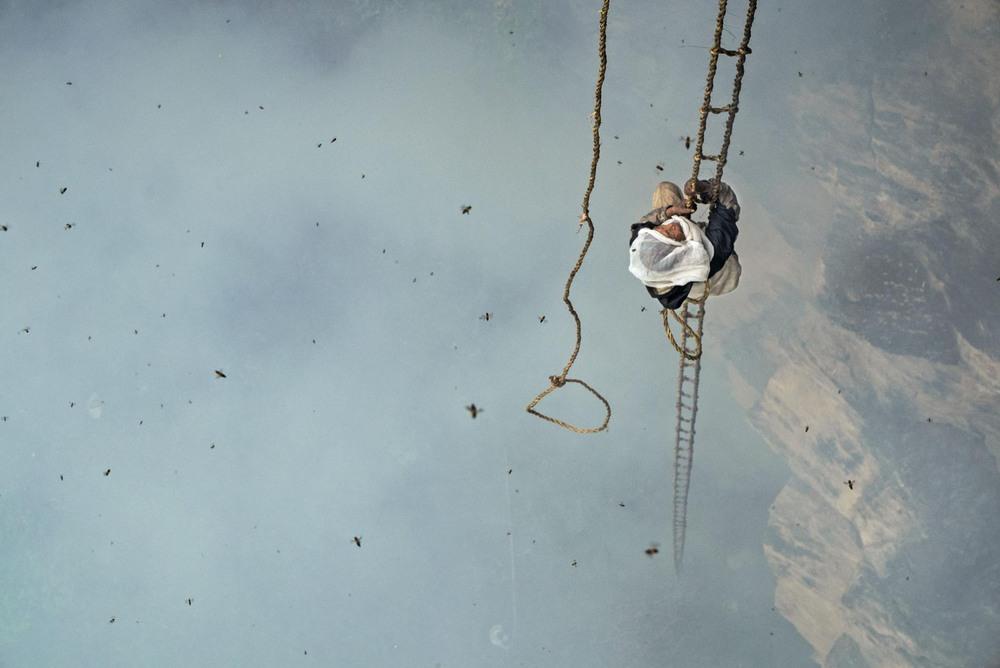 20 Автор: Ренан Озтурк. Маули Дхан поднимается на 30 метров по лестнице из верёвок и бамбука. Его цель – улей, наполненный мёдом. Дым от тлеющей травы помогает дезориентировать пчёл и сократить количество укусов, которые получит Маули.