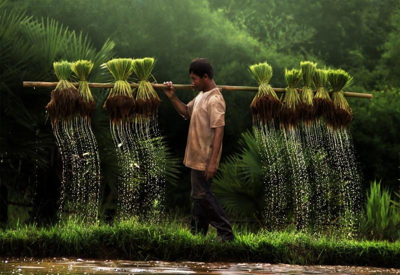 1 Фермер, Вьетнам. Источник: Yothin Insuk