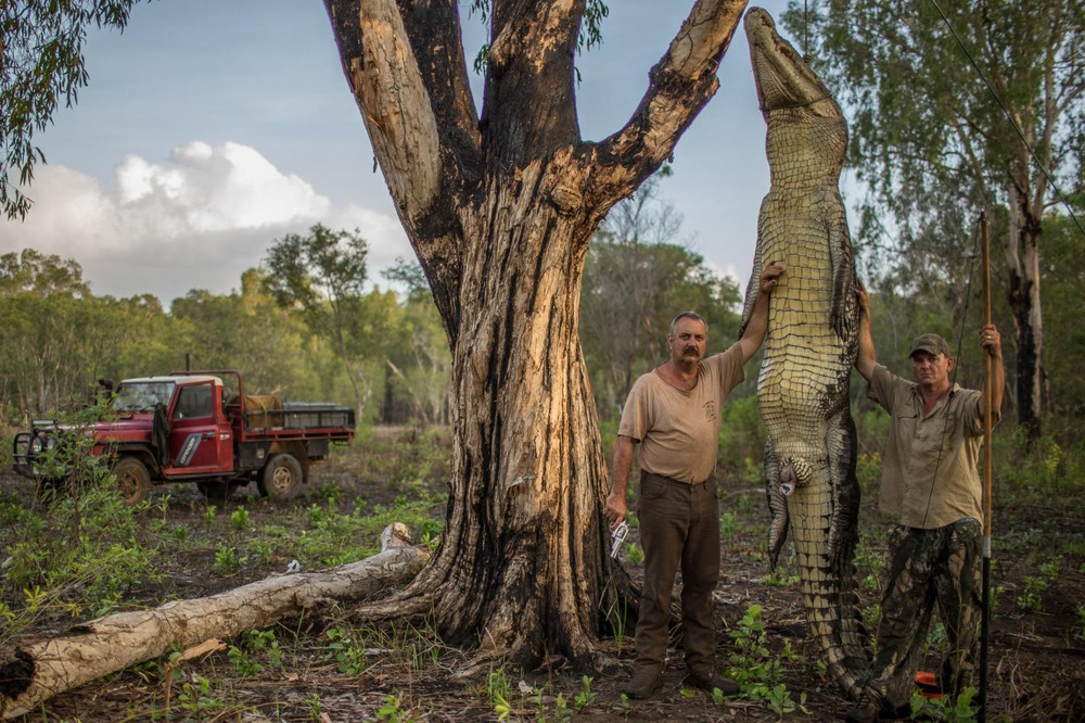 28 Автор: Тревор Бек Фрост. Роджер Мэтьюз (слева) и Аарон Родвелл стоят рядом с 4,6-метровым примерно 680-килограммовым самцом морского (гребнистого) крокодила, которого они законно поймали и убили в Северной Австралии.