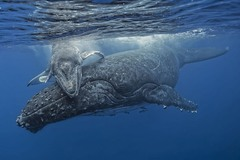 "1 ""Два кита"". Автор - Fabrice Guerin."
