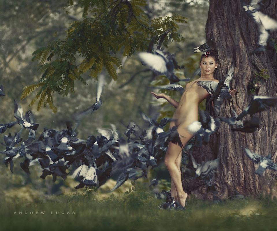Любовь и голуби Автор: Lee Tattar