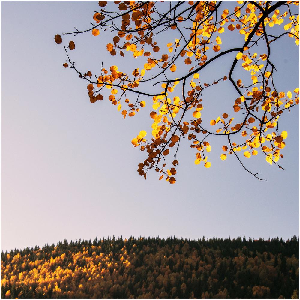 Карпати. Осінь.