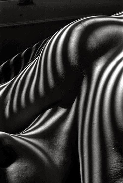 Lucien Clergue «Обнаженные зебры»