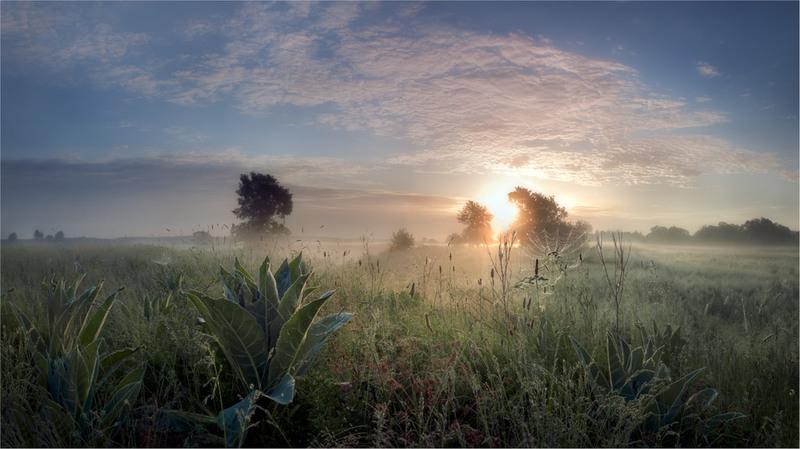 Утро купалось в рассветном тумане-5 Автор: Воробьёв Сергей.