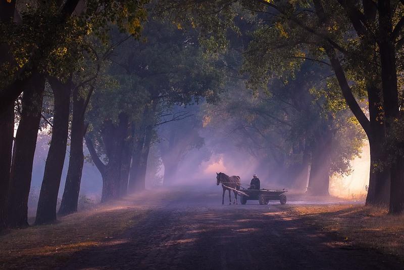По нехоженым тропам протопали лошади, лошади, Неизвестно к какому концу унося седоков. Автор: Мищенко Вячеслав(strelec)