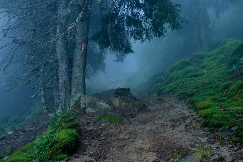 Misty dawn in the forest Автор: Fatalv Argentum