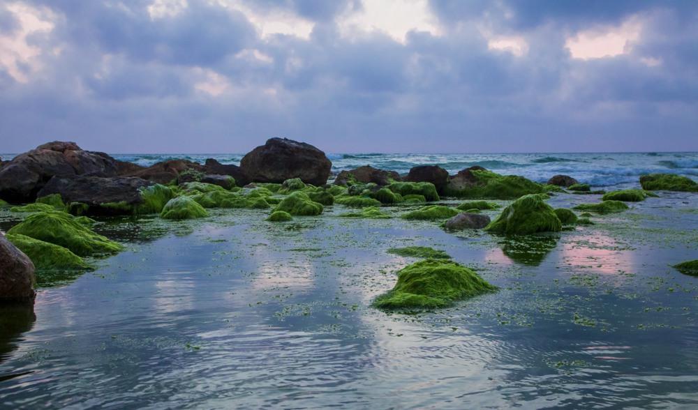 Морские камушки. Автор: Ольга.