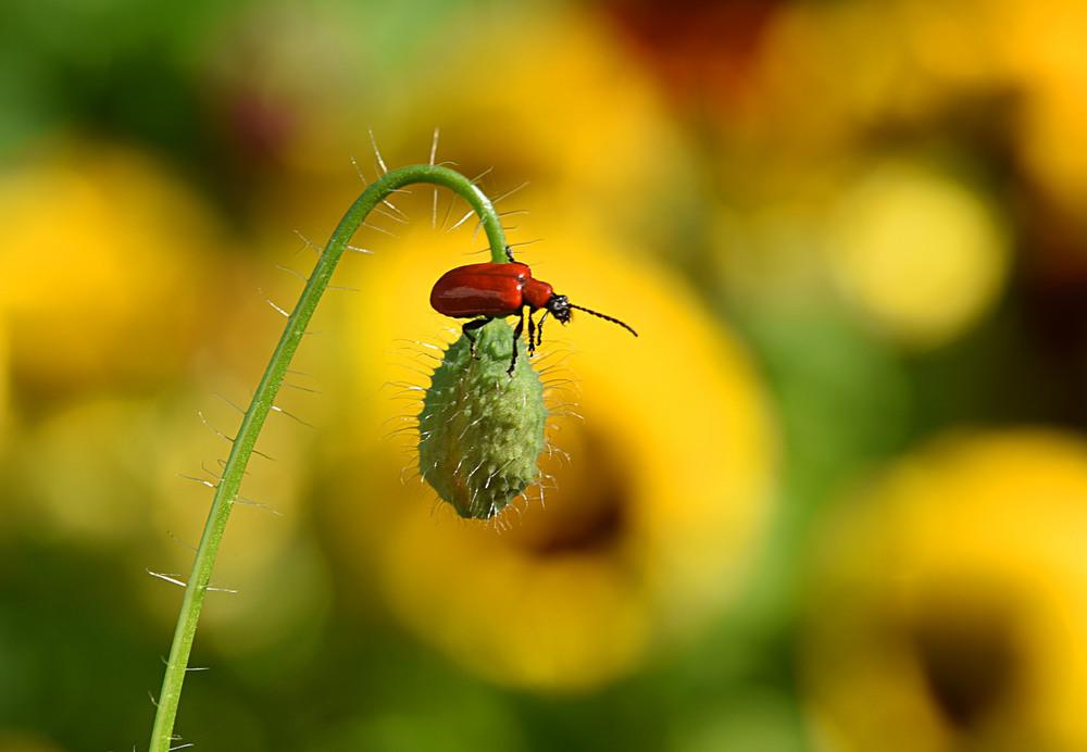 Лето - это маленькая жизнь... Автор: Анатолий Жучинский
