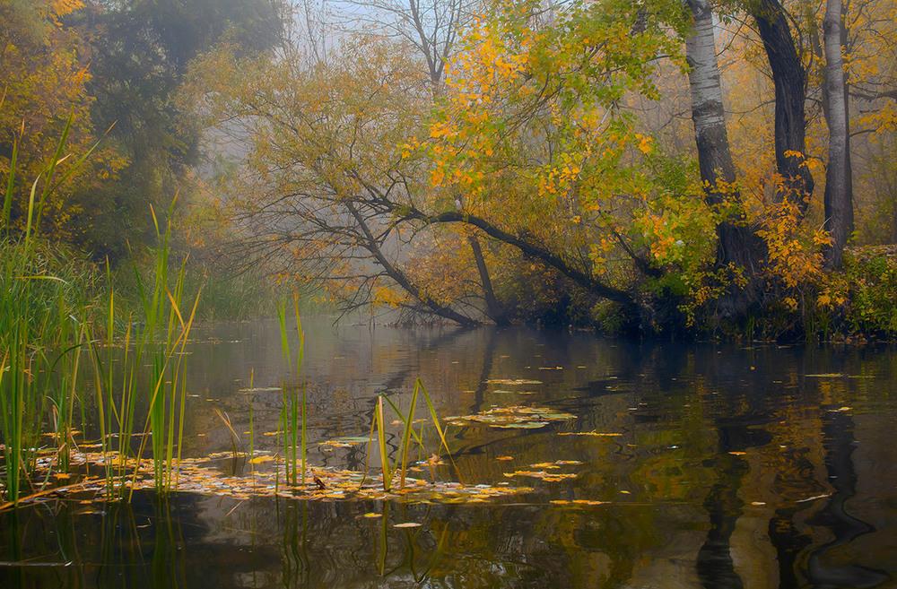Лагуна Мигіївського острова. Автор: Александр Игнатьев