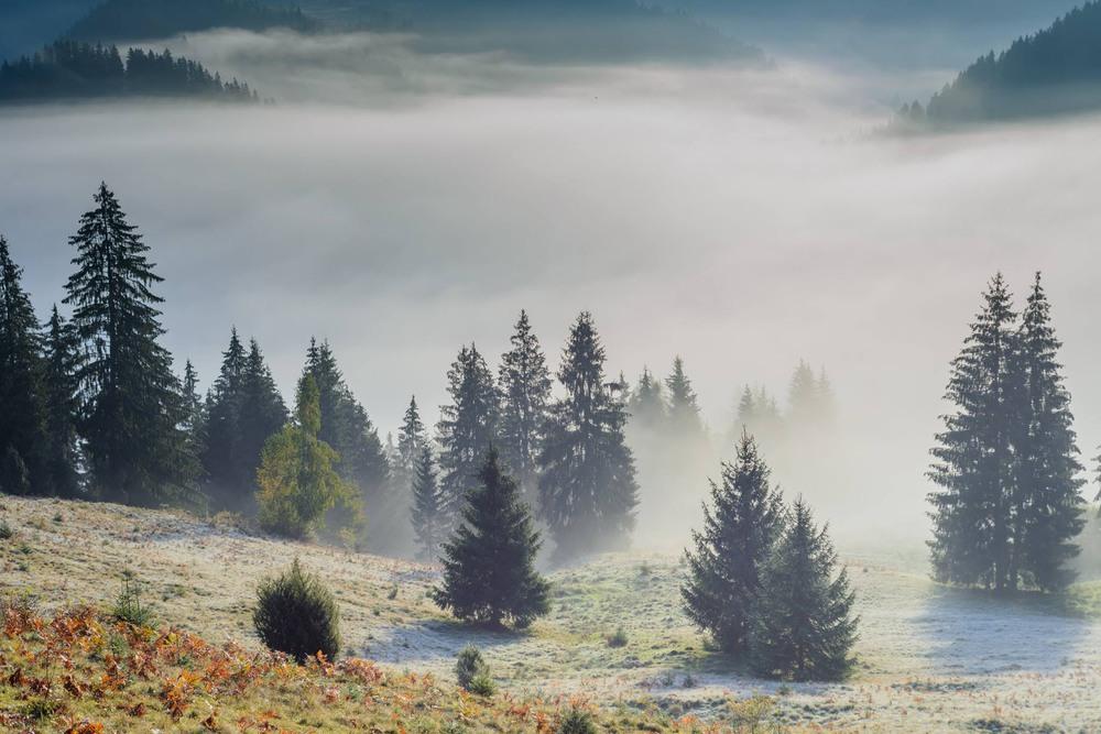 Карпатський ранок Автор: Вася Дячук