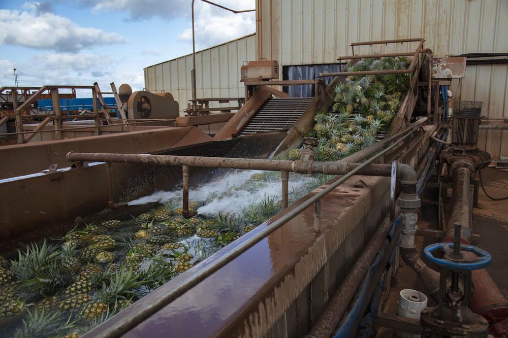 DOLE— ананасовая ферма на острове Оаху