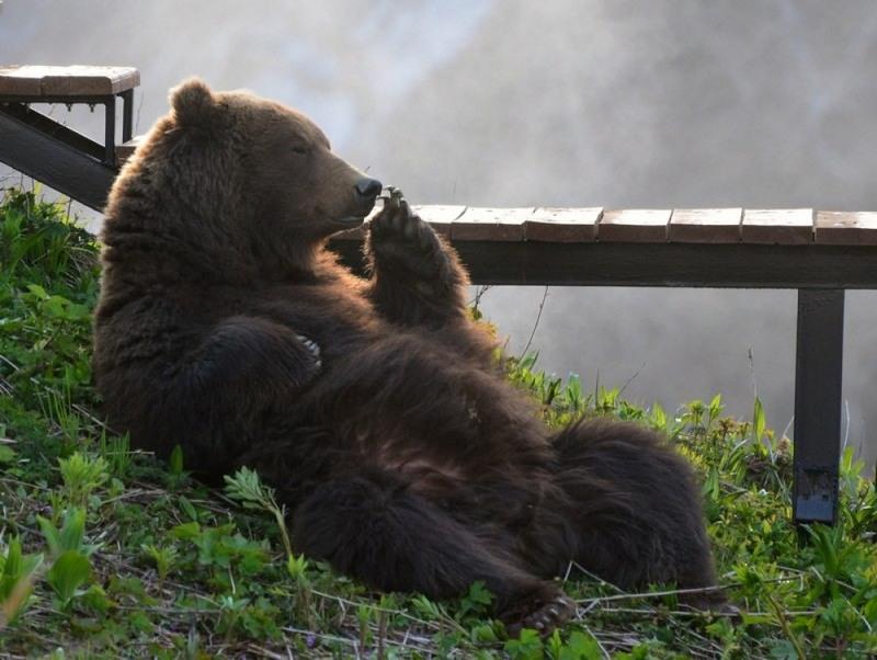 1 Медведь. Снимок сделан на Камчатке, Россия. Автор - Максим Ушаков.