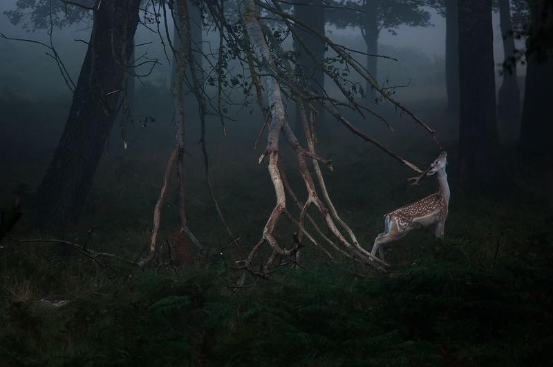 2 Ранее утро в Ричмонд-парке. Англия. Автор - Симон Багота.