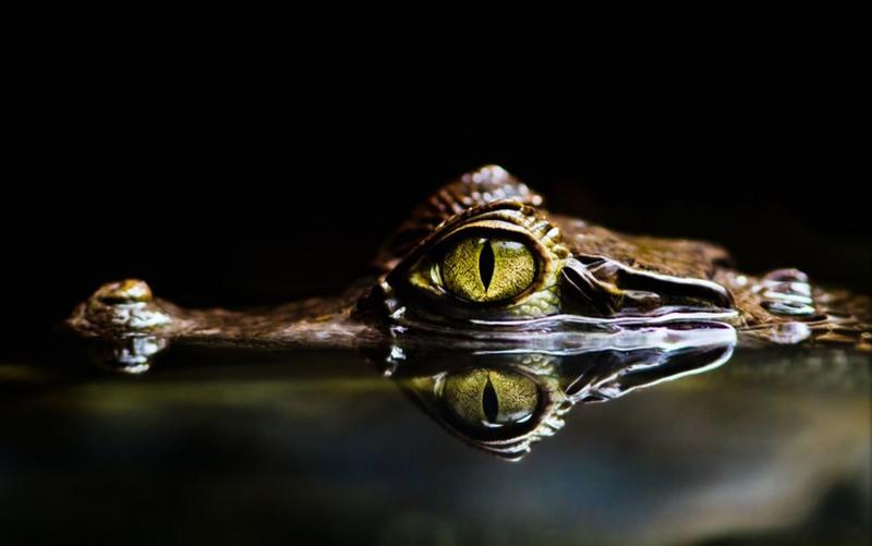 "3 ""The Eye"". Италия. Автор - Джанлука Маньяни."
