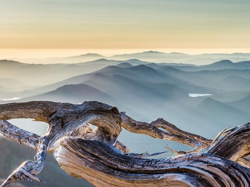 "10 ""Whitebark pine against smoky hills"". Гора Маунт-Худ, штат Орегон, Северная Америка. Автор - Пол Глассер."
