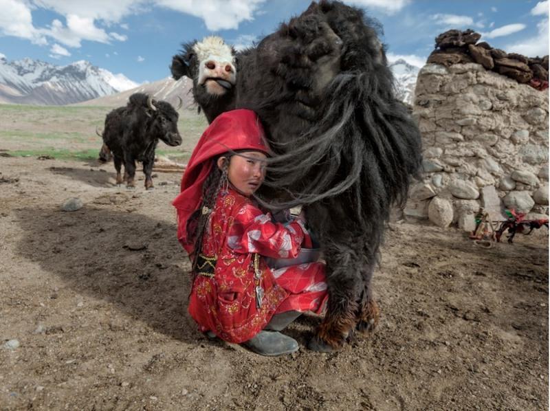 27 Дойка яка, Афганистан. Айем-Хан надела отцовские сапоги и красную паранджу, которую носят незамужние киргизки (выйдя замуж, она сменит ее на белую). Дважды в день девушка доит принадлежащих семье яков. Часть творога, полученного из этого молока, будет засушена на зиму, поскольку в этот сезон яки доятся хуже. Автор - Мэттью Пэйли.