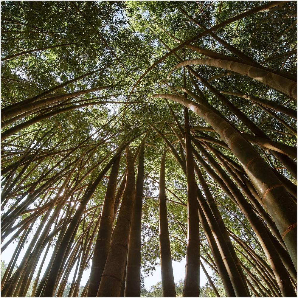 13. Бамбукові зарослі. Взагалі, ліси майже не тронуті.