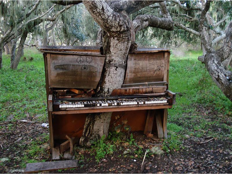 3 Дерево-пианино, Калифорния. Источник: crackoala.