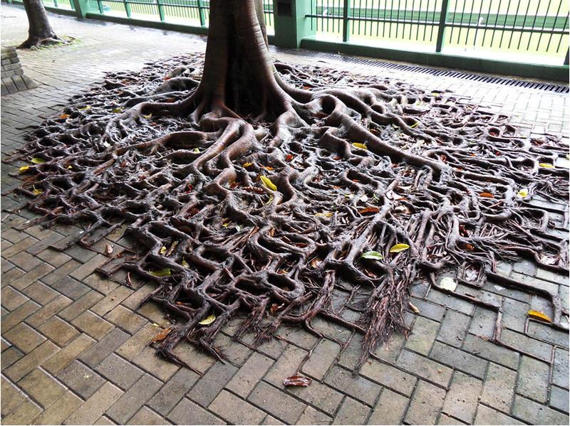 5 Корни дерева повторяют рисунок кирпичного тротуара. Источник:worldbeyondyourown.