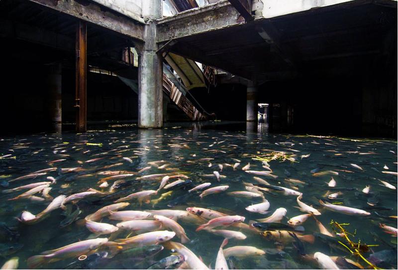 6 Естественный аквариум в заброшенном торговом центре Бангкока, Таиланд. Источник: Jesse Rockwell.