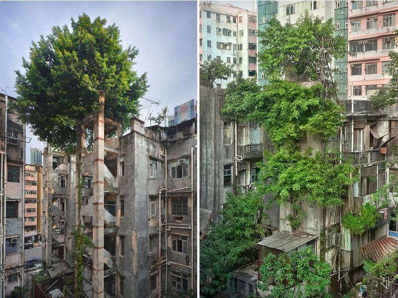 10 Победа деревьев над бетоном, Гонконг. Источник: Romain JL.
