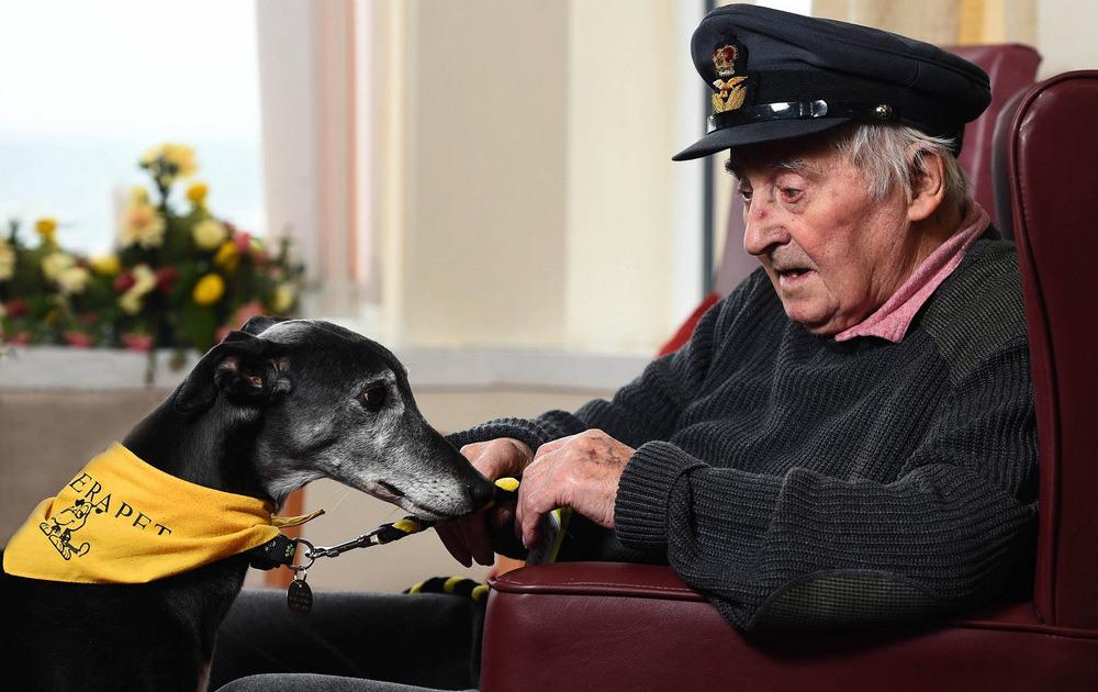 4 Первое место в категории «Собаки-поводыри» Английская борзая (грейхаунд) Меган в Солткотсе, Шотландия. Она изображена с 95-летним Дунканом Карри, бывшим пилотом 617-ой эскадрильи Королевских ВВС, известной также как «Разрушители плотин». Автор фото: Аласдер МакЛеод.
