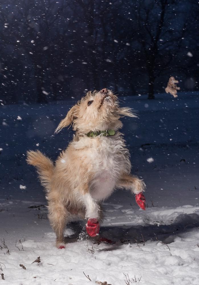 7 Первое место в категории «Я люблю собак, потому что …» (возраст участников 12-17 лет) Снимок сделал 15-летний фотограф из Чикаго. Он запечатлел собаку по кличке Пиппин, которую его семья взяла из приюта в 2010 году. Автор фото: Джулиан Готфрид.