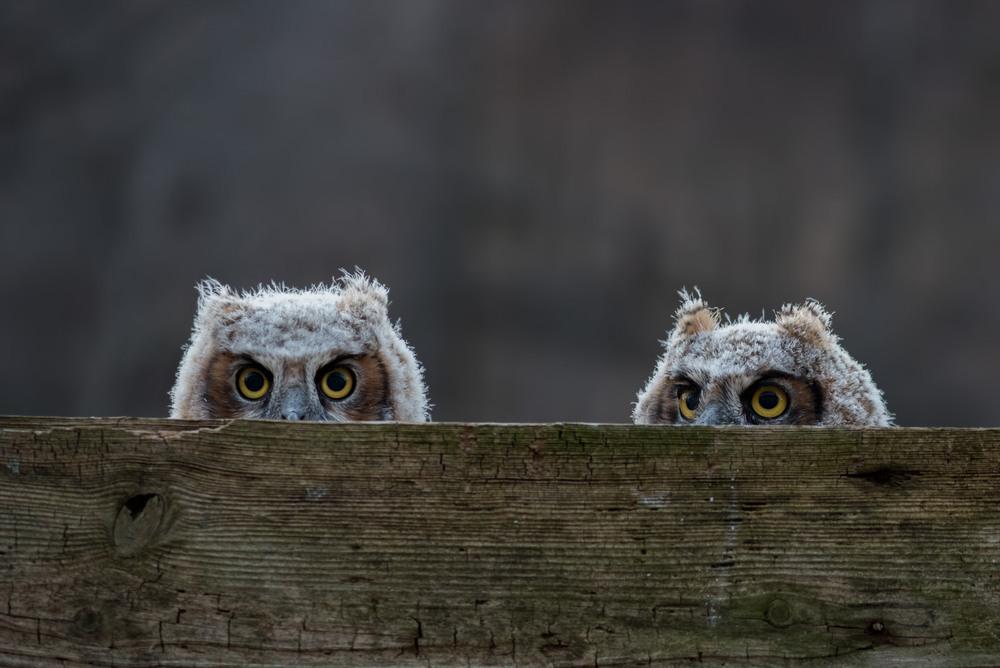 Мы внимательно за тобой наблюдаем! Автор: Анатолий Токарь
