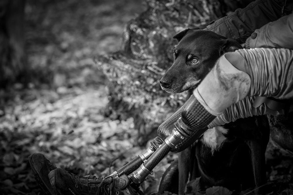 9 Второе место в категории «Собаки-поводыри» Помесь лабрадора и добермана Рино со своим слепым владельцем, у которого ампутированы ноги. Автор фото: Джон Ферретт.