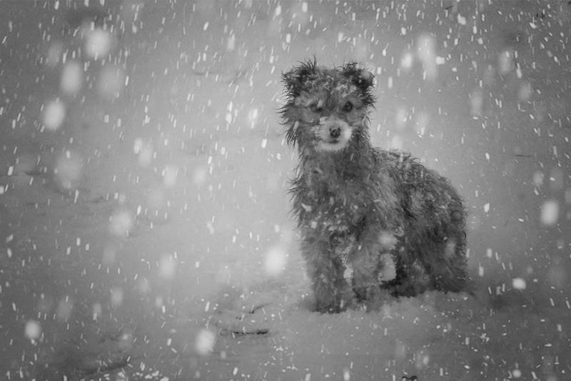 Собачья зима Автор: Александр Литовко (Др@коша)
