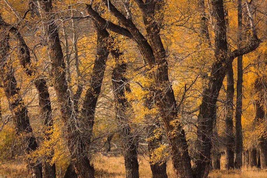 15 Категория «Классический вид», победитель среди молодых фотографов. Йеллоустонский национальный парк. Автор: Mark Rivera