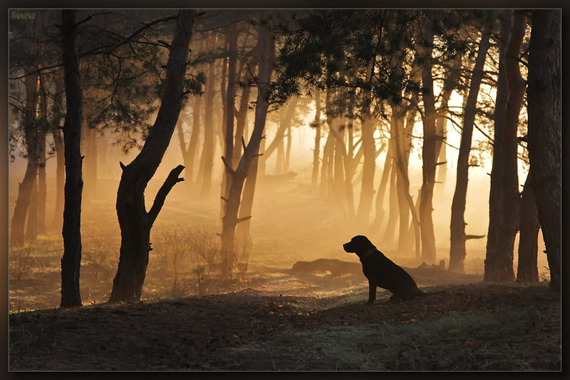 Пёсик в тумане Автор: Александр Куприянов