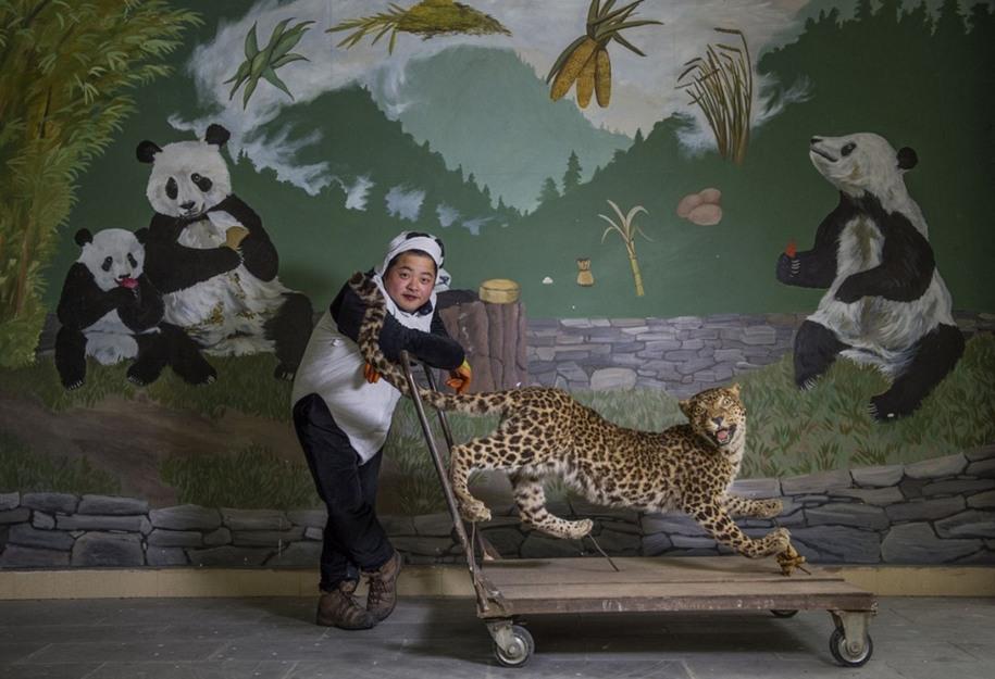 7 Смотритель леопарда. Автор фото: Эми Витале. Местоположение: Волонг, Китай.