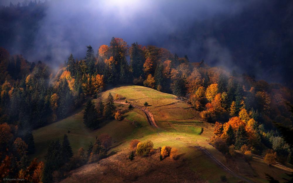 Автор: Polyushko Sergey