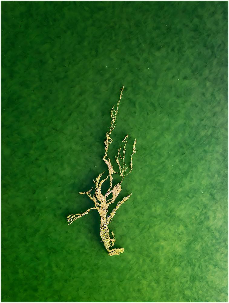 Algae abstraction