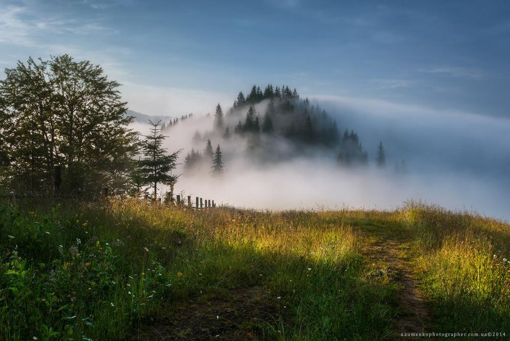 Карпаты. Дземброня. Туманное утро Автор: Александр Науменко