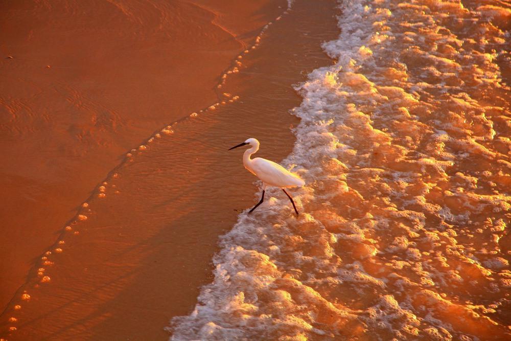 Бегущая от волны. Автор: Ольга.