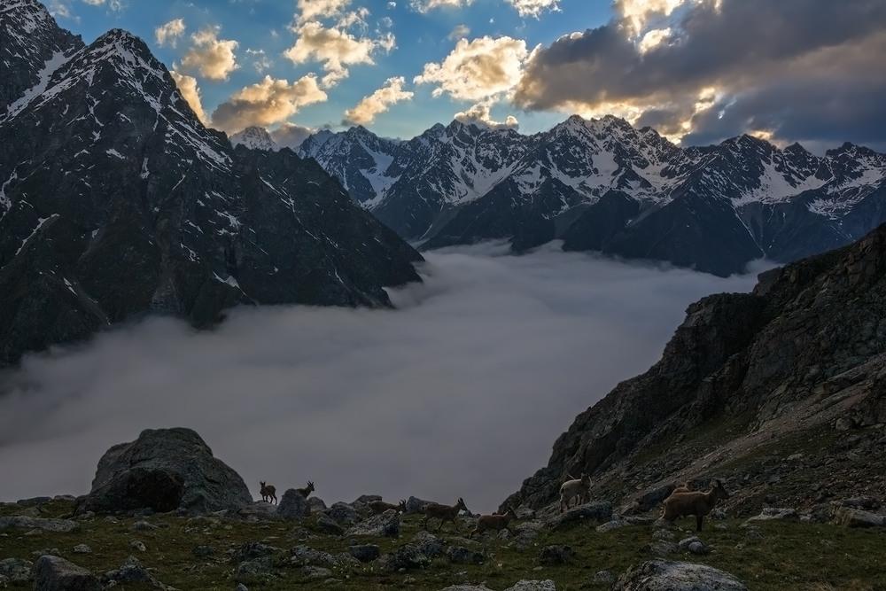 Пришел закат, укрыв ущелье облаками... Автор: Эстелла
