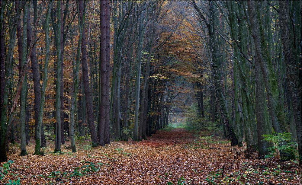 А Ви були у Решуцькому лісі восени?