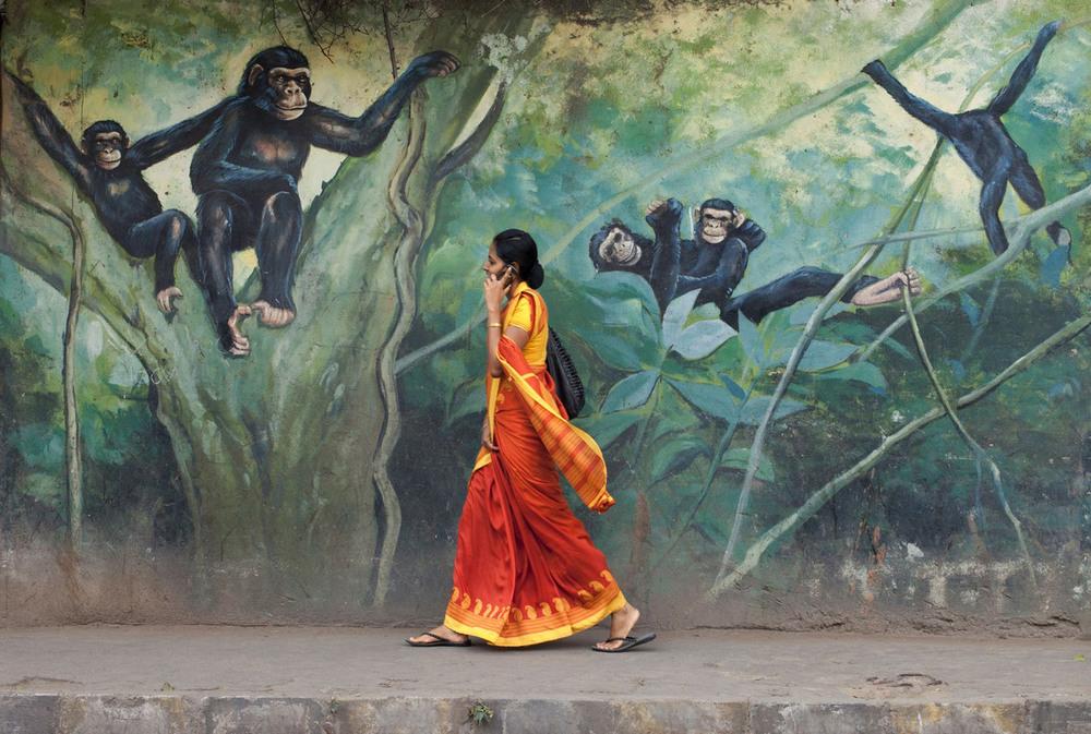 3 3 место – Приставания. Автор фото: Pronob Ghosh. Место: Лалбагх, Бангалор, Индия.